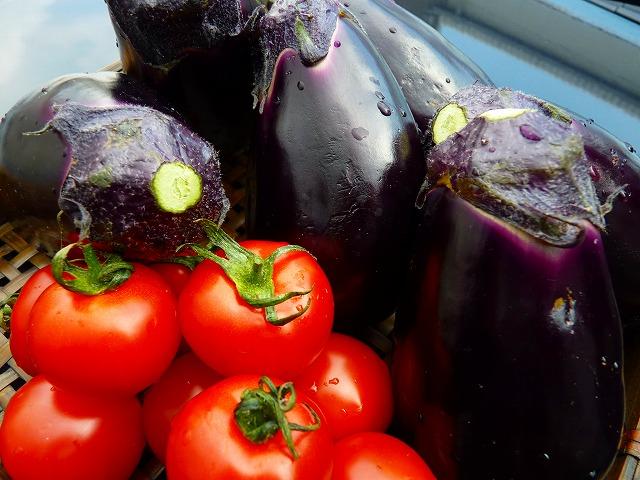 泉州の水ナス 播州のトマト