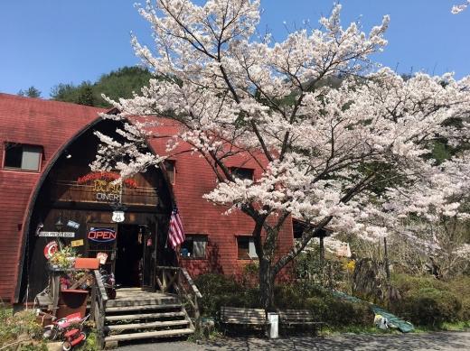 2017.04.14 桜 002