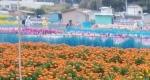 お花摘み(B)