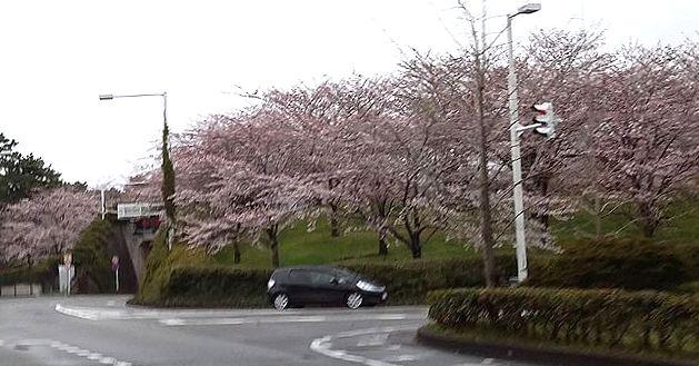 20170409雨と桜