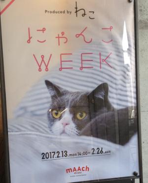 にゃんこWEEK