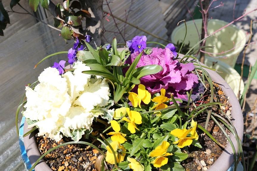 2017 4 2 花見山の寄せ植え ブログ用.jpg