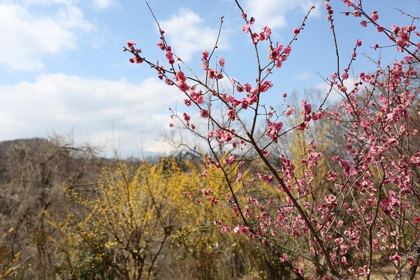 2017 4 2 花実山春の訪れ .jpg