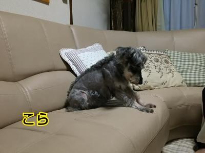 moblog_e670dc6e.jpg