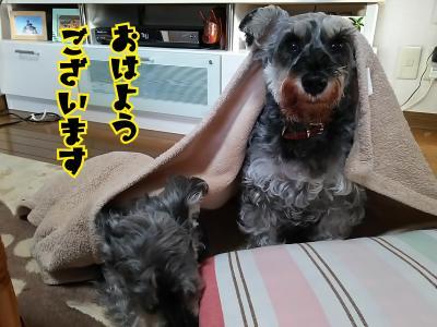 moblog_e9e52754.jpg
