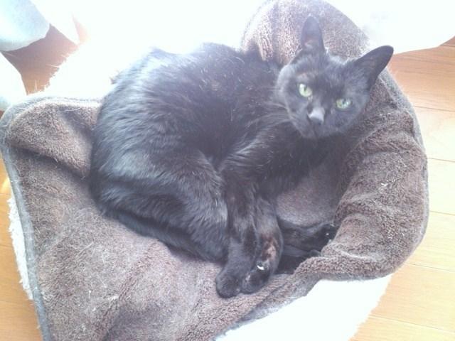 黒猫ぷっちー