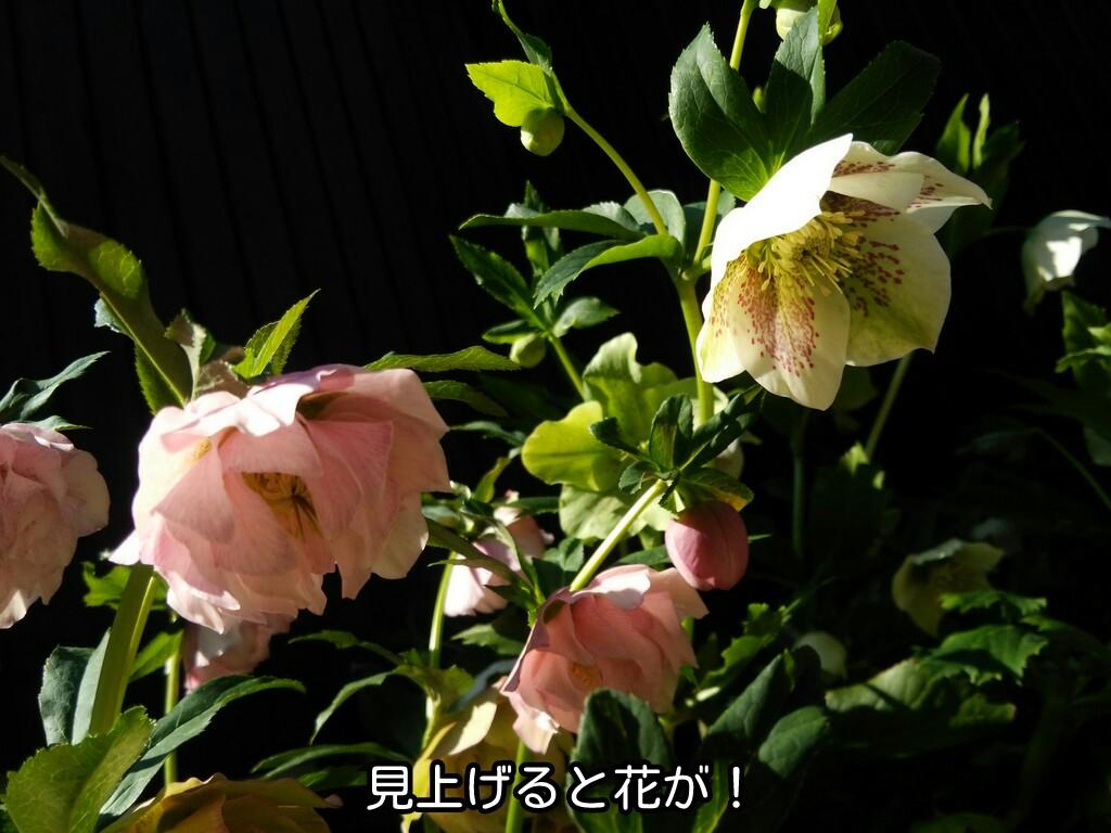 見上げると花が!