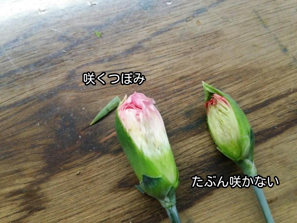 咲くつぼみ