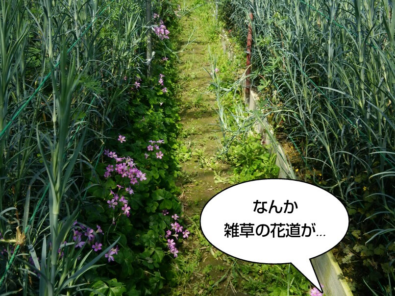 雑草の花道が