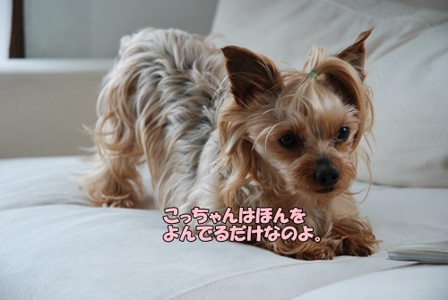 DSC_00100507.jpg