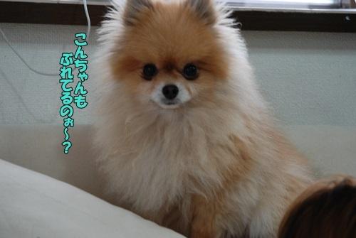 DSC_00140501.jpg