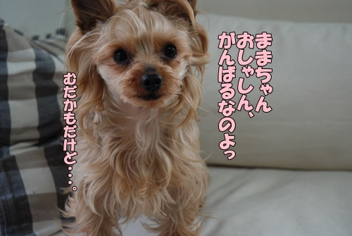 DSC_00160501.jpg