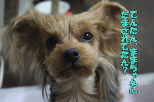 IMG_00450215.jpg