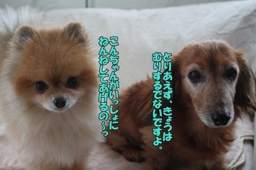 IMG_01000203.jpg