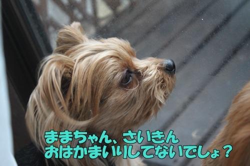 IMG_03460314.jpg