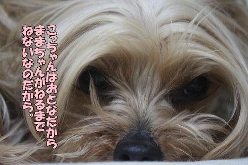IMG_04800324.jpg