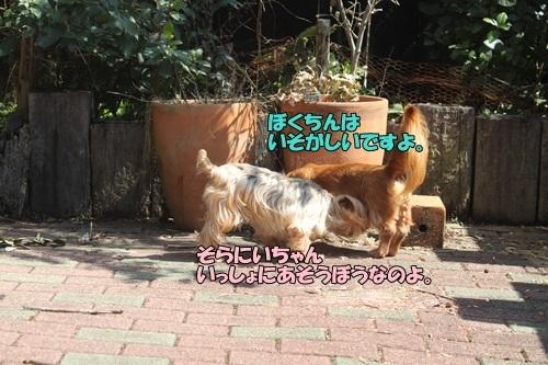 IMG_06430403.jpg