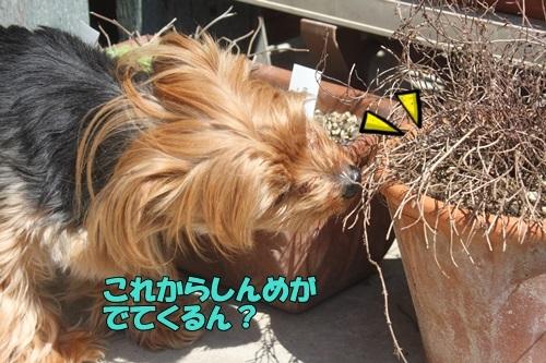 IMG_06610402.jpg