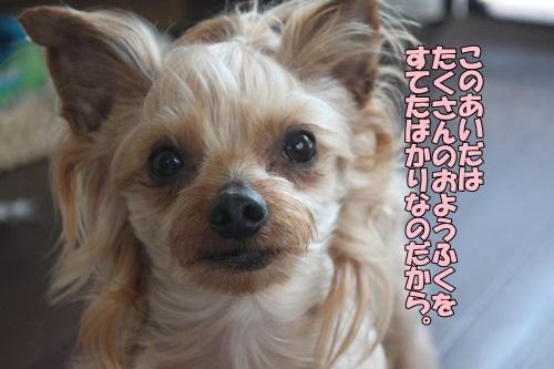 IMG_09730419.jpg