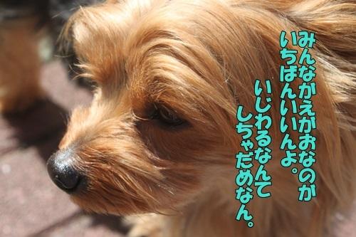 IMG_09860420.jpg
