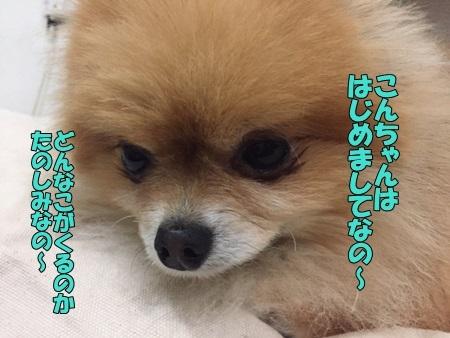 image20305.jpg