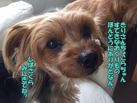 image60426.jpg