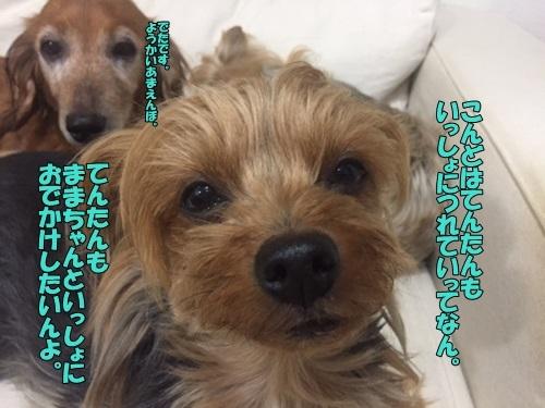 image7032907.jpg