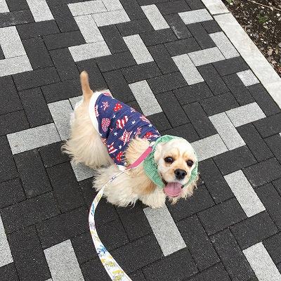 s-散歩だーい!