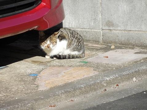 通りすがりに見かけた猫(765)