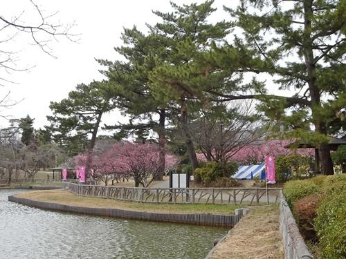 南公園 梅まつり