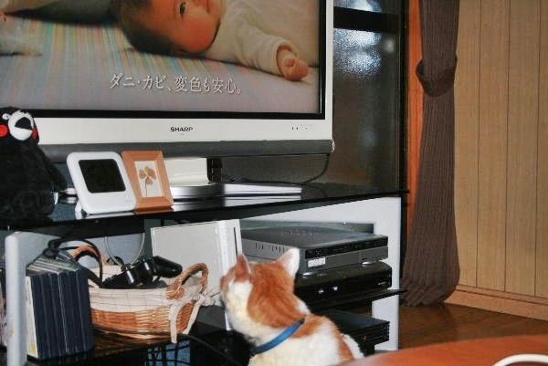 テレビを観てます