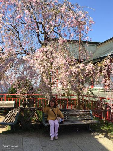 しだれ桜とご満悦なオカン
