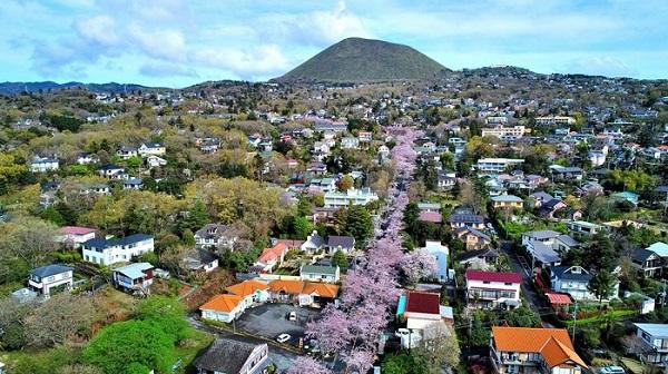 2017桜ドローン