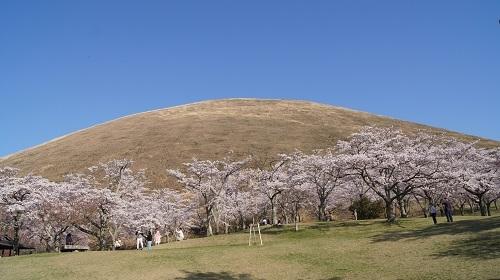 2017桜4