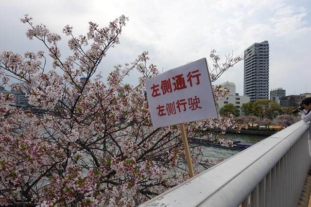 2 造幣局桜の通り抜け (1)