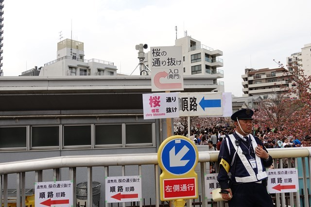 2 造幣局桜の通り抜け (3)