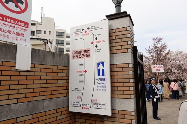 2 造幣局桜の通り抜け (4)