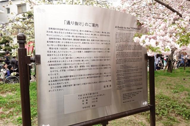 2 造幣局桜の通り抜け (6)