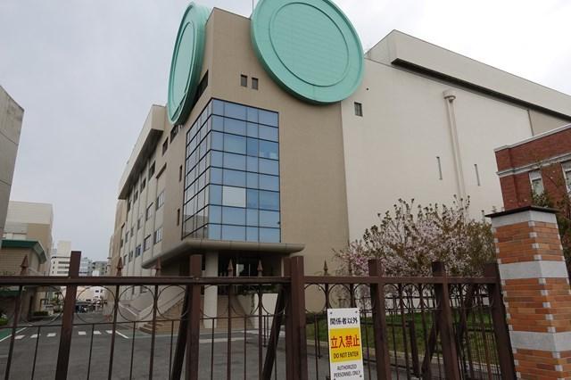 2 造幣局桜の通り抜け (18)