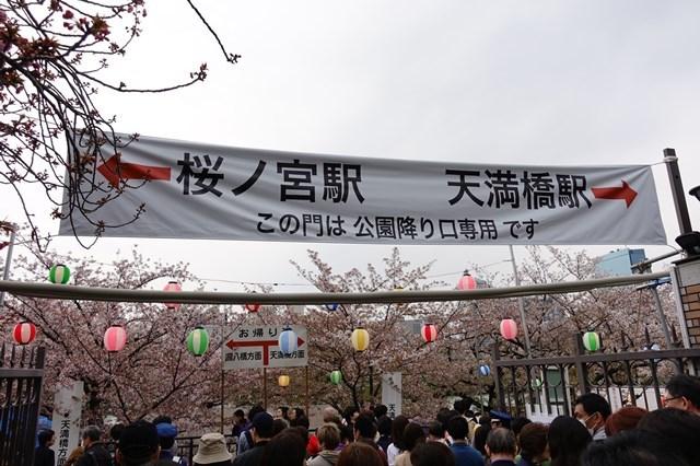 2 造幣局桜の通り抜け (21)