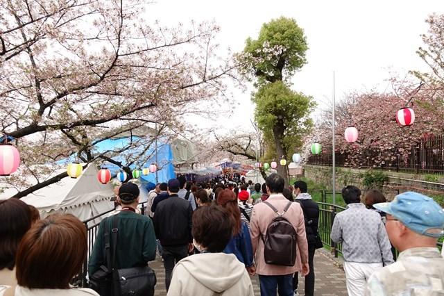 2 造幣局桜の通り抜け (22)