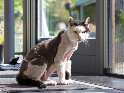 catshaver.jpg
