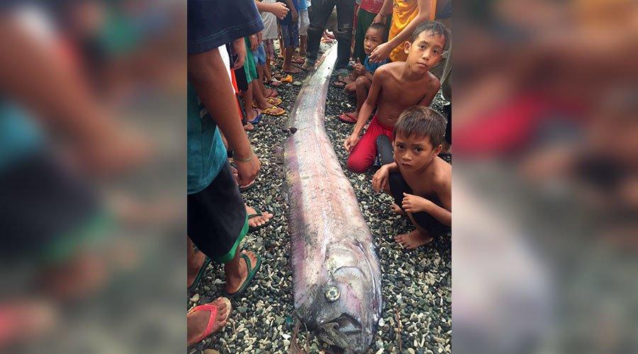 【地震予知】フィリピンで深海魚「リュウグウノツカイ」が相次いで3匹も打ち上げられ、巨大地震の前兆かと住民達の間で噂に