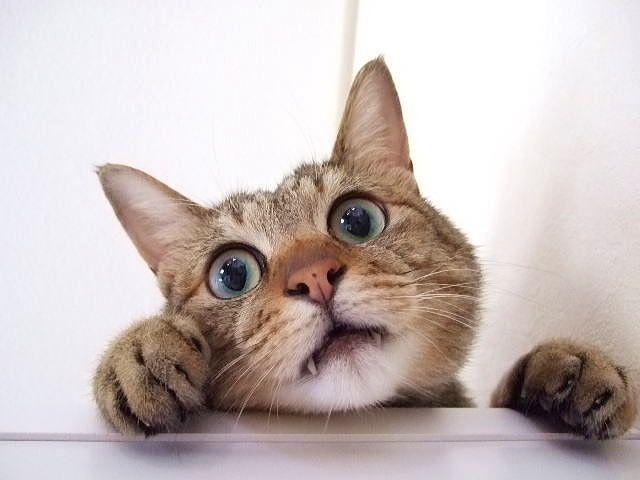 【動物兵器】CIAは冷戦時代に16億円をかけ「猫をスパイ」に仕上げようとしたが大失敗していたらしい?
