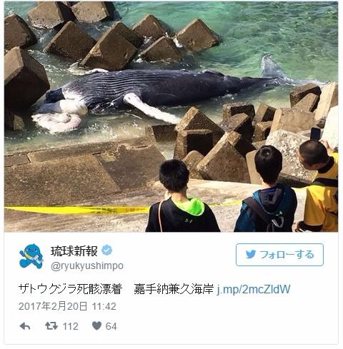 沖縄でザトウクジラが打ち上げられる…嘉手納兼久海岸