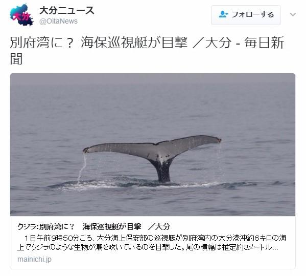【日向灘】大分県の別府湾に「ザトウクジラ」が出現!エサを食べるために立ち寄りか