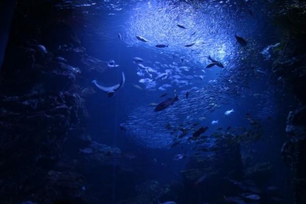 sea32156768.jpg