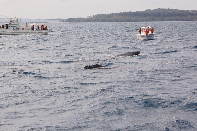 【前触れ】東京湾に「クジラ」らしき物体の目撃情報が相次ぐ…神奈川の横浜や千葉沖でも
