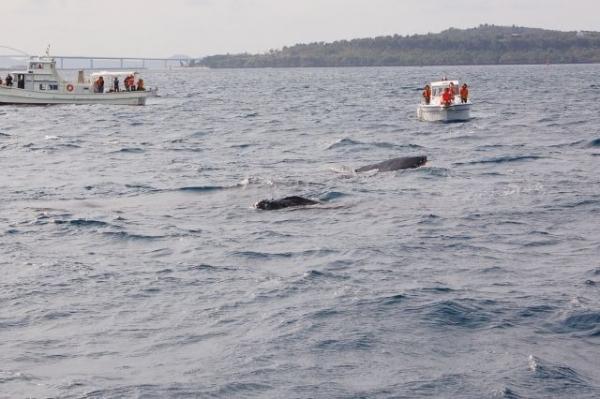 whale3687368.jpg