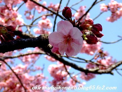 0328桜10